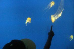 atlanta aquarium fun places