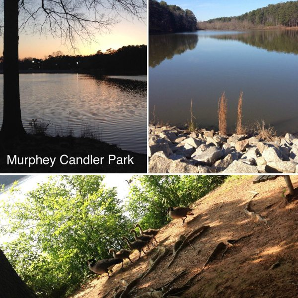 murphey candler park lake and ducks