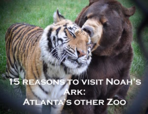 15 Reasons to take your Kids to Noah's Ark - Atlanta's OTHER Zoo