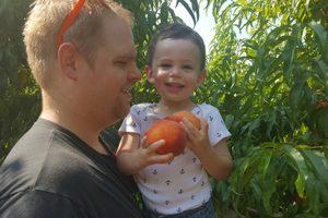 Picking peaches.