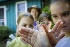 Green River Preserve Bug 1