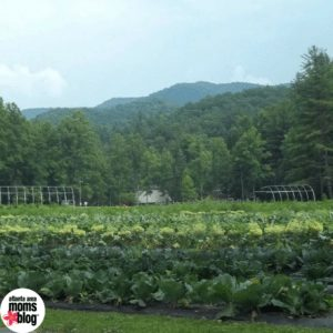 Organic garden at Enota Mountain Retreat