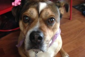 Grief Resulting from Love, or Why I'll Always Have a Dog