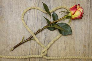 rose-3198626_1920