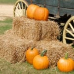 Fall Guide :: Pumpkin Patches & Corn Mazes