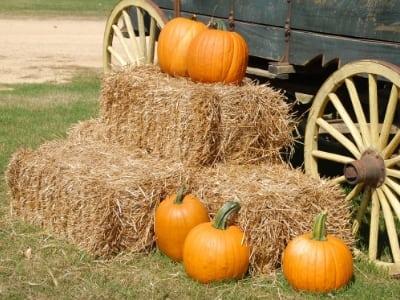 Fall Guide 2019 :: Pumpkin Patches & Corn Mazes