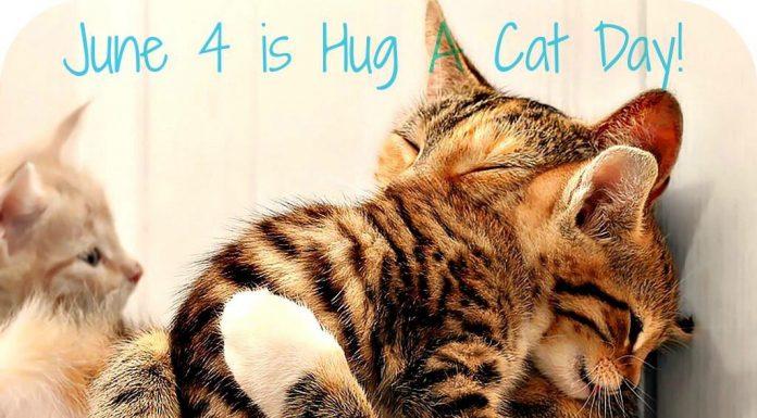 June 4 is Hug Your Cat Day