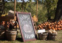 Atlanta Pumpkin Patch