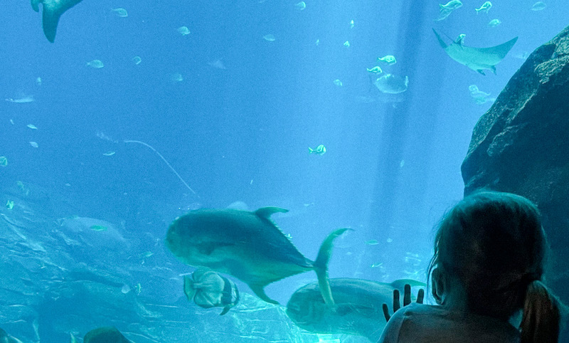 aquariums within driving distance atlanta