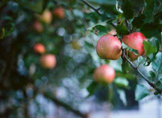 Atlanta Fall Guide Where to Go Apple Picking