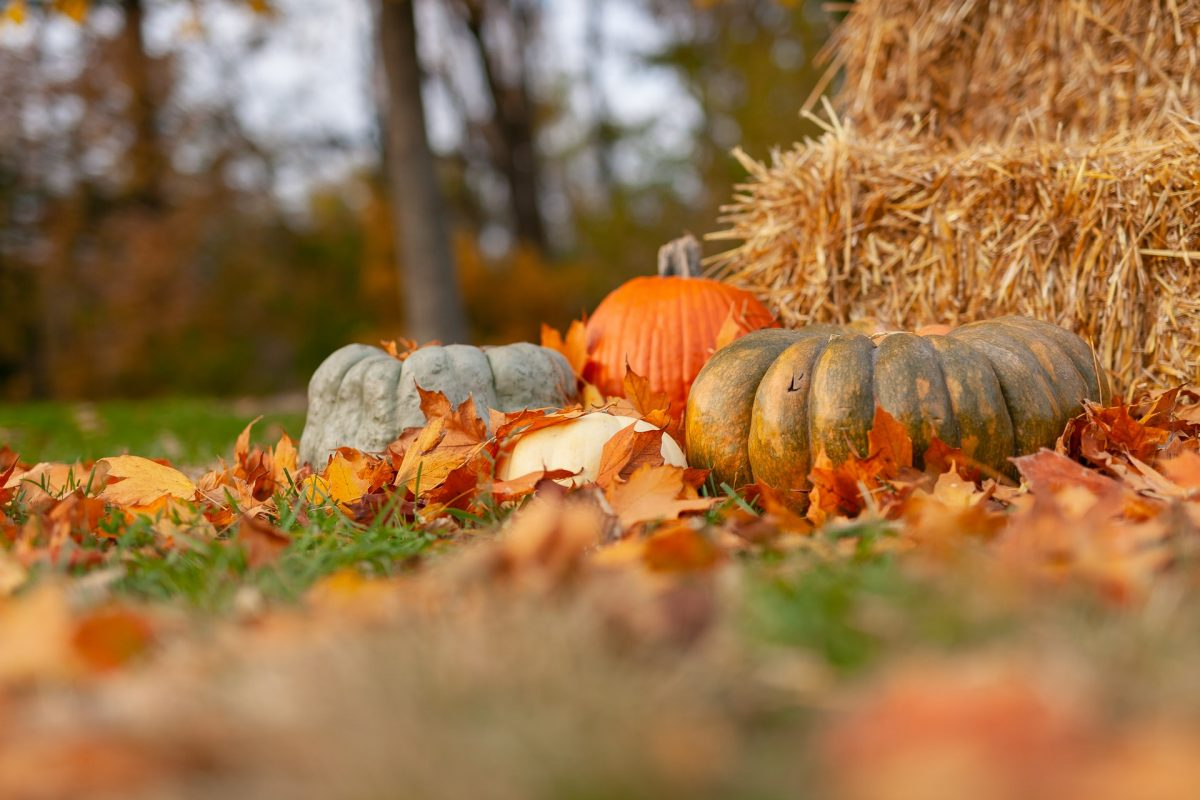 The Ultimate Guide to Atlanta Fall Fun and Halloween Activities